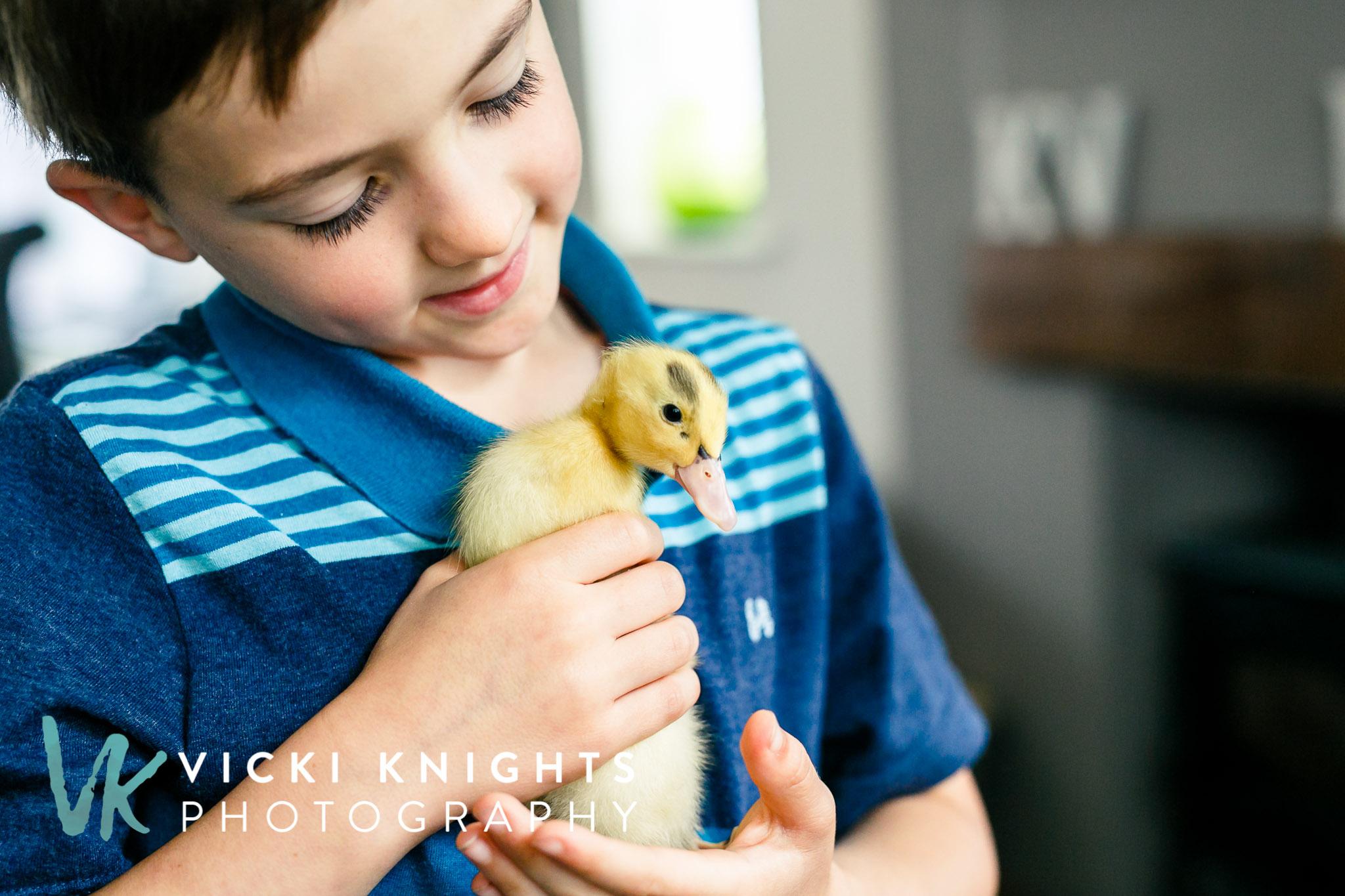 ducklings-vkp-8